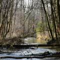 salzburg-guide-photogallery-woods-river-1